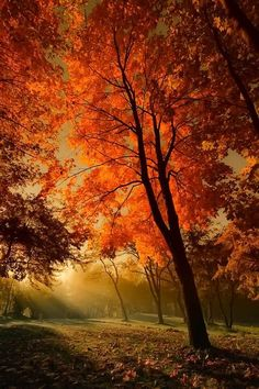 Looks like #fall is not over yet! #glad #fallinlove: