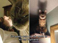 Cat, Kitten, Dog, Jon Snow, Felidae, Pet, Tyrion Lannister, Grumpy Cat Meme: m pretty sure my cat wants to kill my boyfriend