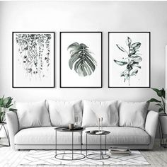Love the watercolor plant photos