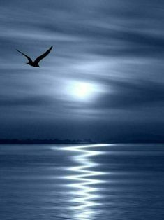 blue blue moon, why seagull in the nite?