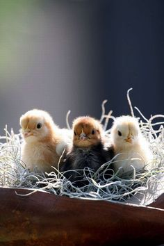 Planting the garden that is your life ~ ~  Build a happy nest. ♥