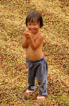 Child playing in the coffee beans drying in the sun in the yard of the family house.  Bali, Indonesia // by yannick