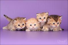 oh. my. gosh. i want em all.