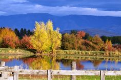 These 8 Country Roads In Oregon Are Perfect For A Scenic Fall Drive Oregon Road Trip, Oregon Travel, Road Trips, Best Places To Live, Places To See, Oregon Forest, Oregon Landscape, Oregon Waterfalls, Evergreen Forest