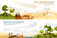 Making the Most of the 'UN Decade on Ecosystems Restoration': Bioregional Regenerative Development as a Deep Adaptation Pathway - Resilience Agriculture Projects, Dwarf Fruit Trees, Systems Thinking, Erosion Control, Animal Habitats, Rain Garden, Replant, Permaculture, Ecology