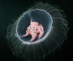 amazing photos of underwater life by Alexander Semenov