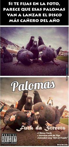 Palomas: Con mas facha que muchos artistas