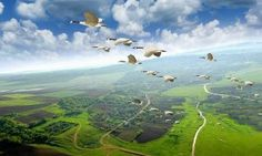 Миграция птиц понятна или загадочна