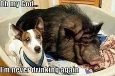 its not the alcohol dude, feel the fur beside you its real..