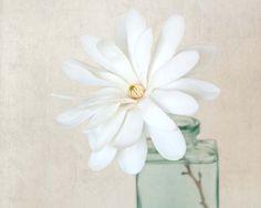 Fine art still life photography print of a white magnolia flower by Allison Trentelman.