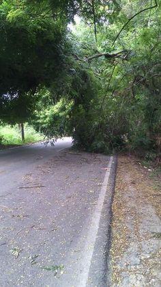 > DENUNCIA DE PELIGRO en carretera Estero/Neyba próximo a la junta de regantes