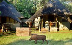 Chobe Safari Lodge   Simply Botswana Safaris