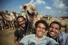 All other selfies have been subsequently canceled due to this badass camel selfie from Giza (Photo: Hossam Atef)
