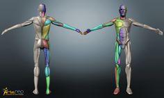 modelar cuerpo humano 3d - Buscar con Google