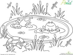 Preschool Kindergarten Animals Worksheets: Pond Life Coloring Page Worksheet