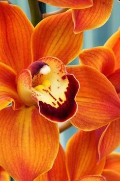 Orange lillies gardening pinterest timeline flowers and flower yellow flowers and orange flowers can bring cheer and brightness to your garden wedding and home so which beautiful flowers do you prefer mightylinksfo