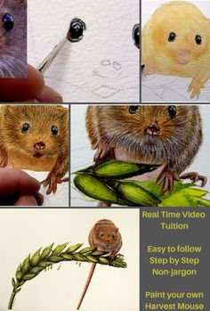 Wildlife artist & online art tutor who specialises in realistic, fine art watercolour paintings & teaching others how to paint. Watercolor Video, Watercolor Pictures, Watercolour Tutorials, Watercolor Paintings, Ballet Painting, Painting Fur, Rock Painting, Wildlife Paintings, Animal Paintings