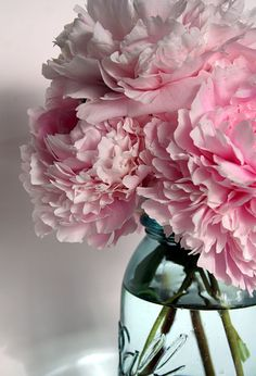 peonies in a ball jar . by kim carney