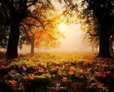 Door to the autumn by Alvar Astúlez