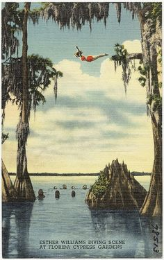 Esther Williams, swimmer and movie star. diving scene at Florida Cypress Gardens Destin Florida, Old Florida, Vintage Florida, Florida Travel, Florida Home, Kissimmee Florida, Clearwater Florida, Naples Florida, Beach Travel