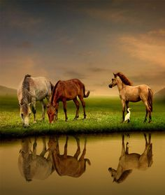 For all those who love horses! Most Beautiful Horses, All The Pretty Horses, Animals And Pets, Baby Animals, Cute Animals, Beautiful Creatures, Animals Beautiful, Cowgirl And Horse, Farm Yard