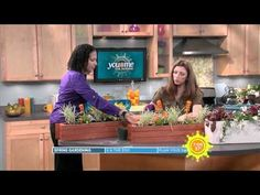 Tips On How To Grow Organic Vegetables In A Balcony Window Box