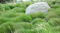 Findling um Gras