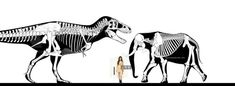 Who would win in a fight between an elephant and a T. rex? - Quora Tyrannosaurus Rex, Model Airplanes, T Rex, Moose Art, Elephant, Dinosaurs, Animals, Models, Paper
