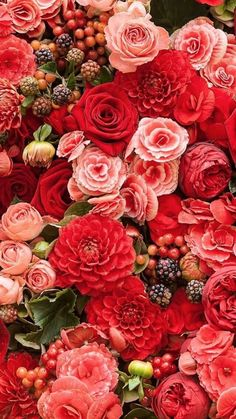 New Flowers Red Roses Nature Ideas Coral Roses, Red Roses, Pretty Flowers, Red Flowers, Deco Floral, Floral Wall, Flower Aesthetic, Flower Backgrounds, Beautiful Roses