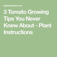 3 Tomato Growing Tips You Never Knew About - Plant Instructions