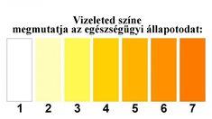 A vizeleted színe jelzi, hogy mennyi vizet kell innod a nap folyamán Nap, Bar Chart