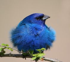 That warm fuzzy feeling? Nah, goosebumps, now leave me alone to settle down!  (Blue bird of happiness)
