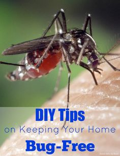 DIY Tips on Keeping