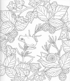 Harmony Of Nature Adult Coloring book Pg 6