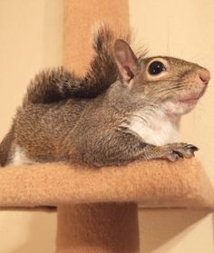 Jill the Rescue Squirrel ❊