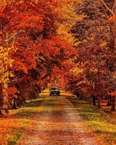 Amazing shades of fall season! #seasons #fall #outono #autumn #fallseason #leaves #coloursofautumn @theplanetd