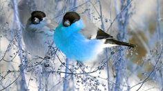 3 Hour bird sounds Relaxation - Nature sounds music for Meditation - Bir...