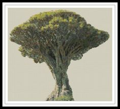 Gráfico para punto de cruz del drago de Icod de los Vinos. El ejemplar de drago canario más famoso es el llamado drago milenario de Icod de los Vinos, en Tenerife, aunque actualmente se estima que su edad real oscila entre los 500 y los 600 años.