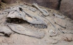 Camels in the Arctic: 4 Cool New Fossil Discoveries