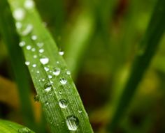 Green grass with raindrops. Selfmade macro photo