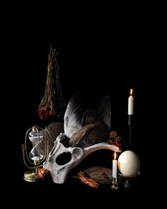 - X or x - Glossy Archival Paper - x are Limited Run of 100 - x are Limited. Poetry Photography, Still Life Photography, Antique Frames, Studio Setup, Vanitas, Aesthetic Collage, Animal Skulls, Natural History, Dark Art