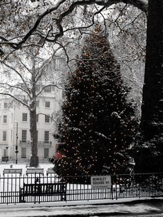 Christmas tree in Berkeley Square, London, photo by Retro Chick