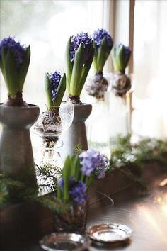 Hyacintvaserna i zink kommer från Cosas. De övriga är inköpta under årens lopp.