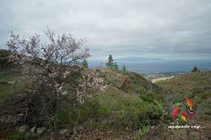 Camino de Montiel #tenerife #landscapephotography #hikingtenerife #canarias #tenerifesenderos #senderismo #trekking #hiking #hike #sky #nature #outdoor #guiadeisora