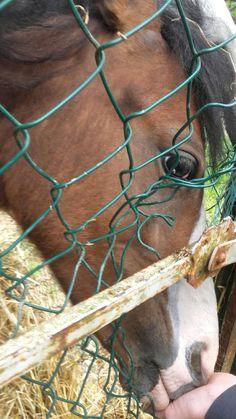 Feeling Horses, Feelings, Animals, Animaux, Horse, Animal, Animales, Animais