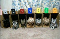 Ding dong! cat race