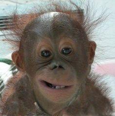 Crooked Smile | Crooked smile | Orangutans 2