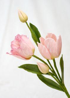 Sugar tulip