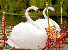 Swan Boats, Boston Public Gardens - Swan Boats by David Paul Ohmer, via Flickr