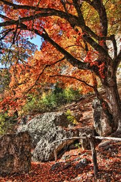 Lost Maples State Park - a Must See in the Fall